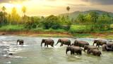 Мистериозната смърт на стотици слонове в Африка