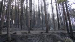 Около 120 хил. кубични метра е похабената дървесина при пожара в Пирин
