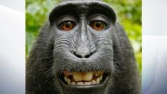 Маймуните не могат да съдят за авторски права, реши US съд