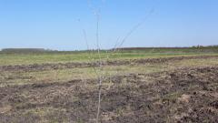 Безследно изчезнаха животновъд и двама дървосекачи