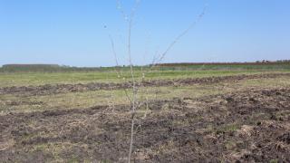 Безводие в Кричим застрашава хиляди декари земеделски земи