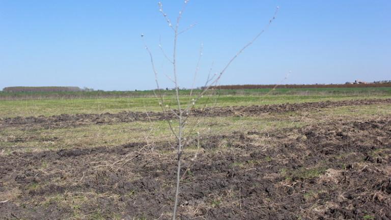 Фирма за добив на въглища унищожава частни ниви в Дивотино