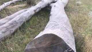 Глобяват собственик на заведение за отрязано дърво в Пловдив