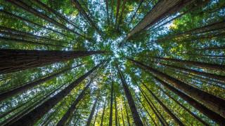 В Етиопия засадиха повече от 200 млн. дървета за 1 ден