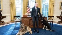 Каква ще е съдбата на кучетата на Джо Байдън