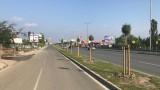 Прерязаха 29 новозасадени дървета на Софийското околовръстно