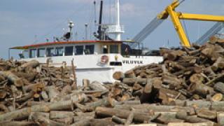 Граничари спасиха дървесина за над 100 000 лв.