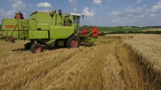 Над 50% от българската пшеница се изнася. Има шанс за сделка със Северна Корея