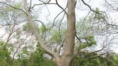Търсят доброволци да наглеждат дърветата в парк Бедечка