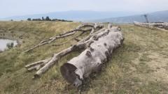 """Яне Янев обвинява кмета на Сандански за """"вандалска сеч"""" на вековни дървета"""
