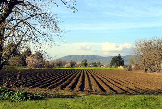 """Фонд """"Земеделие"""" ще кредитира инвестиции в селското стопанство и през 2013 г."""
