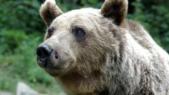 Тумор уби първата танцуваща мечка в Белица