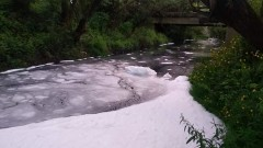 Рудник отрови рибата в река Луда Яна край Пазаржик