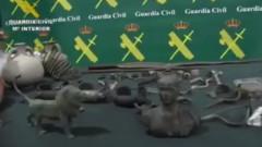 Връщат в България над 30 хил. антики, задържани след акция в Испания