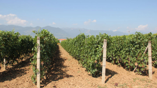 Изнесли сме 23 млн. литра вино за 10 месеца през 2016 г.