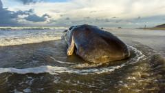 Пластмасата уби кита