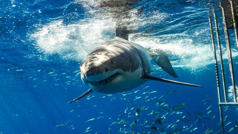 В Испания заснеха 6-метрова акула, обикаляща до плувец