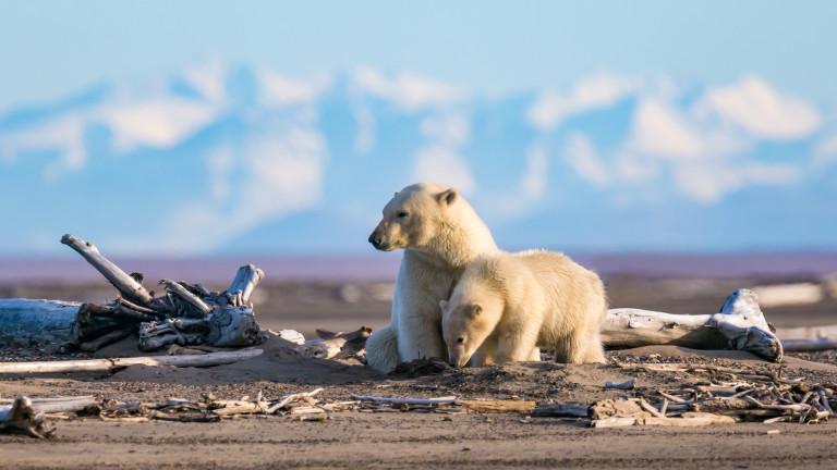 Тръмп разреши добив на нефт в огромни територии от защитена арктическа Аляска