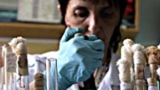 Свинският грип продължава да носи пари на измамниците