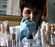 """Първи смъртен случай от """"свински грип"""" в Германия"""