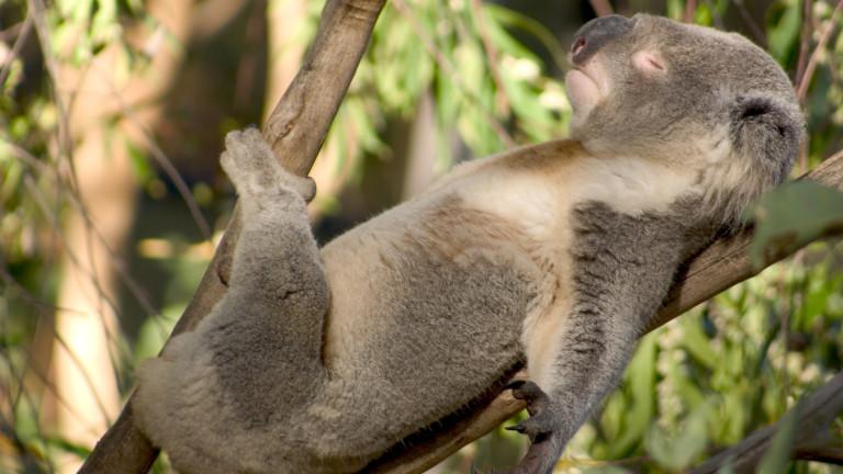 Кои животни спят най-много и кои - никога