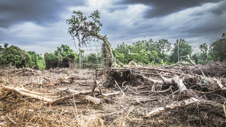 Унищожаването на природата - истинската причина за пандемиите