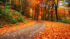 Защо листата на дърветата променят цвета си през есента