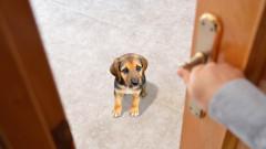 Как да подготвим кученцето си да остава само
