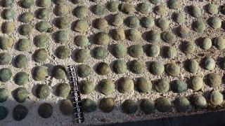 Откриха 118 старинни монети в къща в старозагорско