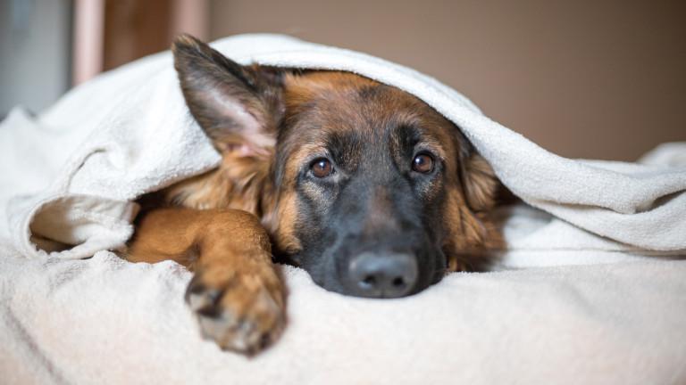 Как кучетата поемат от стреса на стопаните си