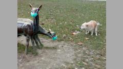 "Сложиха маски и на сърничките в столичната градинка ""Кристал"""