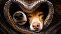 Защо не можем да спим без завивка, дори и когато е горещо