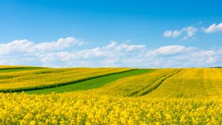 Румъния не е имала толкова добра реколта от жито и рапица от десетилетие