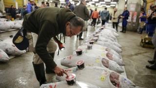 В Япония продадоха за $323 хиляди първата за годината риба тон