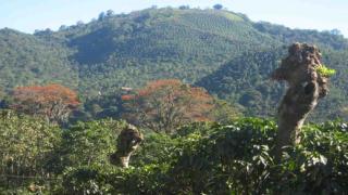 Венецуела национализира производството на кафе