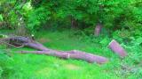 Заливат дървета с нафта и сол в старозагорския квартал Бедечка