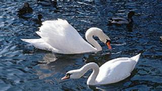 Чужди орнитолози наблюдават птиците в две наши езера
