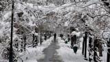 Валежите от сняг спират