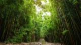 Колко дървета ще преборят глобалното затопляне