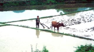 Китай забранява използването на земеделска земя за голф игрища