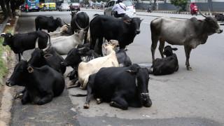 Двама индийски фермери убили мюсюлманин, пращал крави в кланица