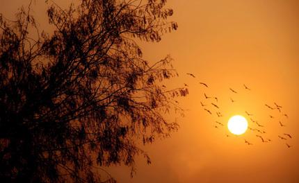 Крият причината за смъртта на хилядите птици