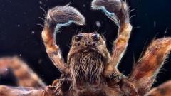 Как да предпазим дома си от паяци тази есен
