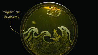 Микробиолози създават шедьоври от бактерии