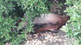 Намериха мъртъв делфин на варненска спирка