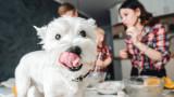 Кои са най-популярните кучешки имена за 2020 г.
