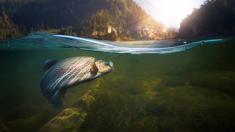 Ще изчезнат ли сладководните риби