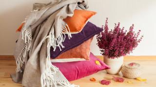 5-те цвята в дома ви, които ще ви направят щастливи