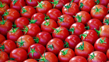 Нов сорт домат създадоха български учени