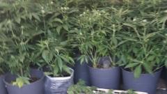 Боен арсенал и наркотици откриха в тетевенска къщичка